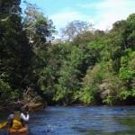 Aventuras pela Amazônia – Viagens pela floresta