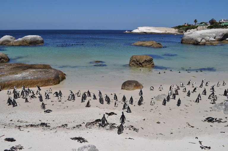pinguinera-boulders-beach-africa-do-sul