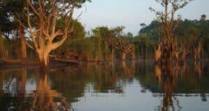 As águas do rio Tupana formam verdadeiros espelhos marrom-oliva