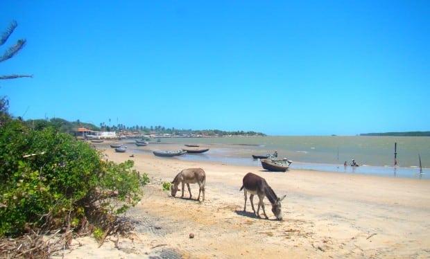 A Ilha das Canárias, no lado maranhense do Delta do Parnaíba, tem restaurantes e pousadas, mas é isolada
