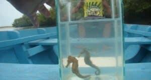 Os peixes no aquário