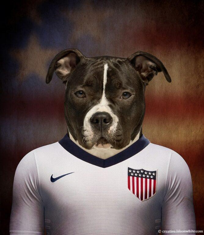 American Stadffordshire Terrier - Estados Unidos