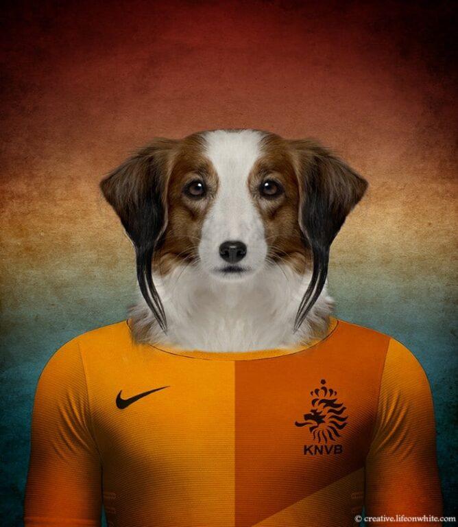 Kooikerhondje - Holanda