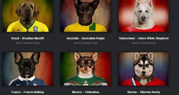 cachorros paises