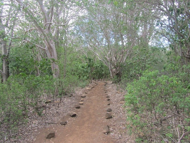 trilha-fernando-noronha