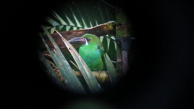 Um dos pássaros que vimos, fotografato pelo telescópio; muito legal!