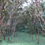 Mindo, um santuário de pássaros no Equador