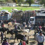 otavalo turismo equador feira cuicocha mochilao 171
