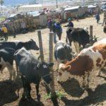 otavalo turismo equador feira cuicocha mochilao 181
