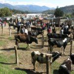 otavalo turismo equador feira cuicocha mochilao 191