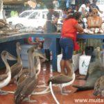 Guia de Galápagos: quanto custa viajar para as ilhas no Equador
