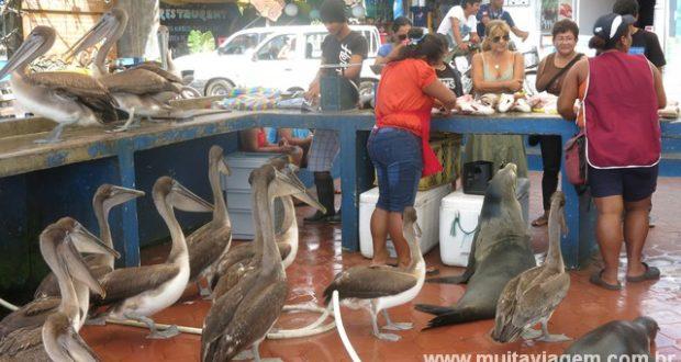 Há muito o que fazer de graça em Galápagos, como visitar esse mercado de peixe em Santa Cruz