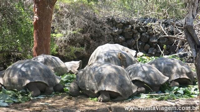 Os centros de reprodução das tartarugas gigantes estão entre as atrações grátis das ilhas Galápagos
