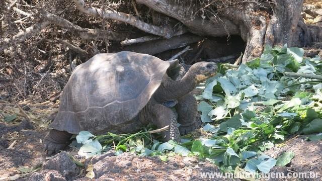 Mais uma foto do animal que batiza o arquipélago