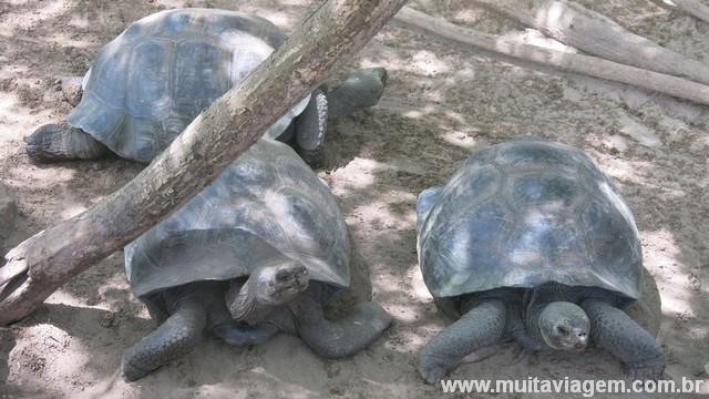 Tartarugas gigantes do centro de reprodução de Isabela: passeio gratuito