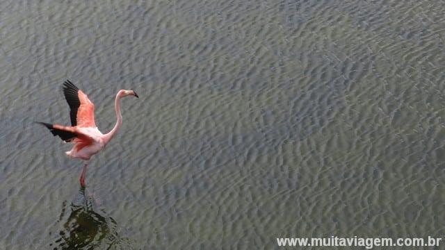 O pássaro rosa posa para a foto do blog Muita Viagem