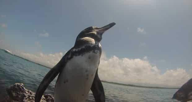 Guia de Galápagos: Atrações grátis e os melhores passeios pagos