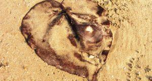 coracao-areia-tailandia