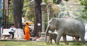 Dicas sobre o que fazer em Siem Reap, no Camboja