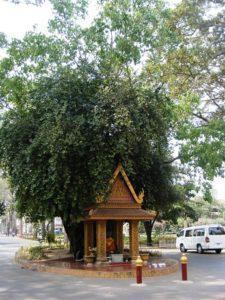 siem-reap-cambodja