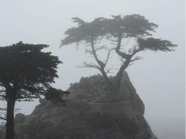 lone-cypress-2015