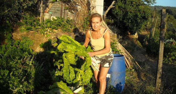 Fazendas orgânicas ao redor do mundo contratam viajantes - foto: WWOOF