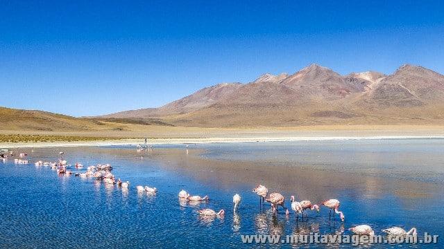 Flamingos em uma lagoa no altiplano boliviano