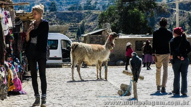 Lhama e falcão preso para turistas sem noção tirarem fotos no Vale de Colca, no Peru