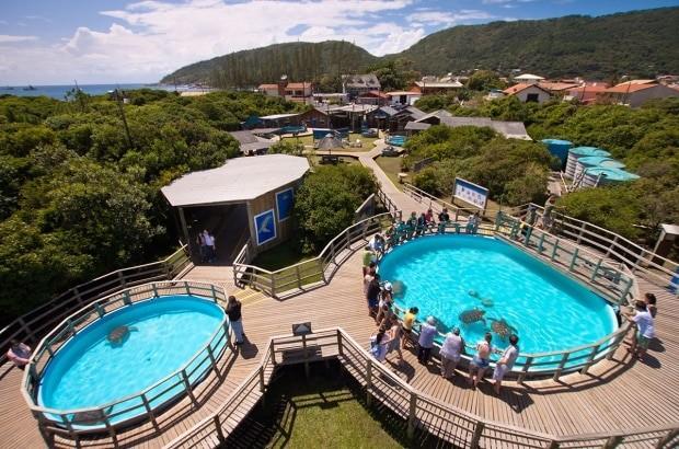 Vale a pena visitar o Projeto Tamar em Floripa - fotos: Tamar/Divulgação