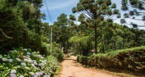 Monte Verde tem ruas de terra, árvores centenárias e muitas flores