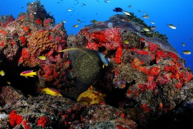 A barreira de recife de Corais guarda uma variada vida marinha - foto: ICMbio