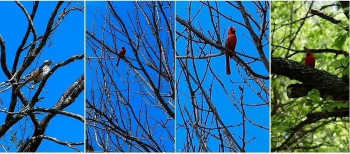 Bird Watching no Jardim Botânico de San Antonio, Texas.
