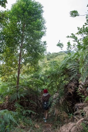 Trilha cercada de verde para um mirante na Serra do Lopo
