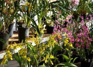 Exposição e venda na Festa da Orquídea