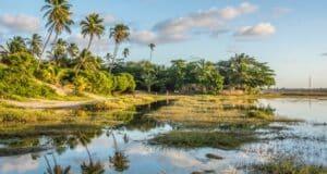 Pontilhada por coqueiros, Arembepe fica entre o mar e lindas lagoas