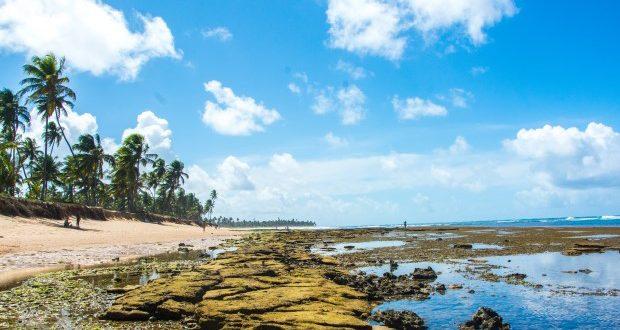 A praia do Forte, no litoral norte da Bahia, é uma coleção de lindas paisagens