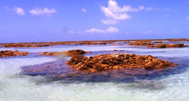 Dicas para mergulho em maragogi alagoas for Piscinas naturales maragogi