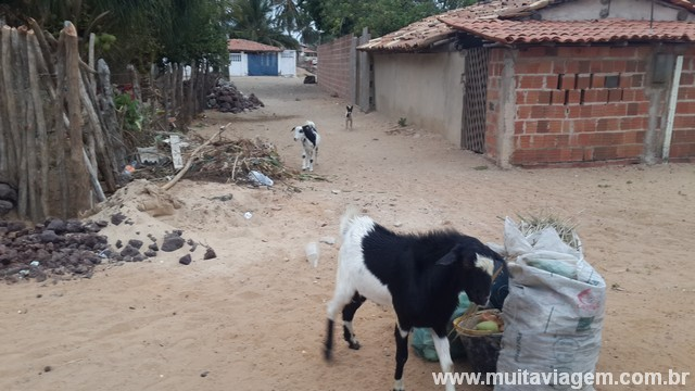 A cabra do fundo saiu do beco e me atacou, mas fugi