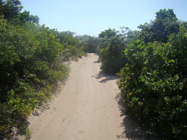 Em alguns trechos, a vegetação lambe os dois lados do Bandeirante