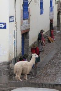 Cholas e lhamas circulam nas ruas de Cusco