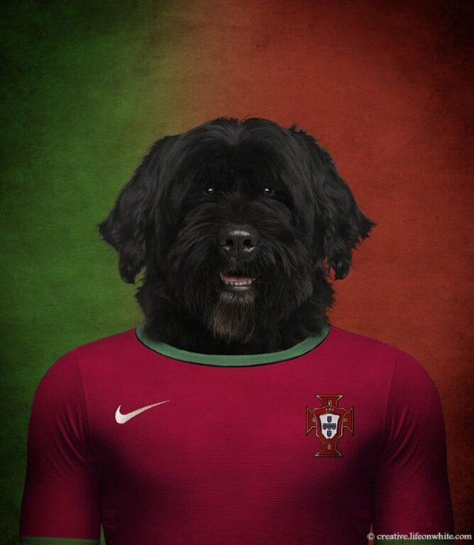 Cão D'Água Português