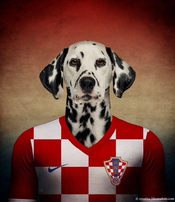 Dálmata - Croácia