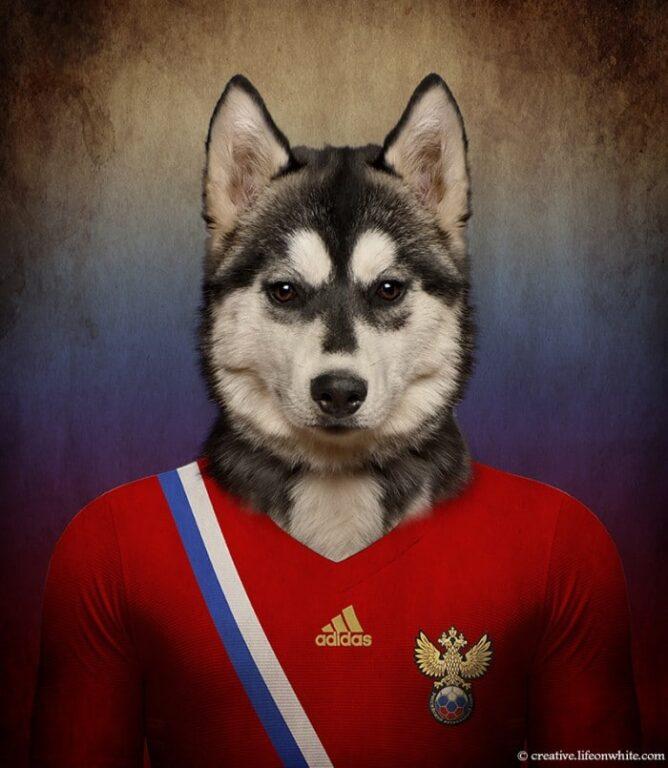 Husky Siberiano - Rússia