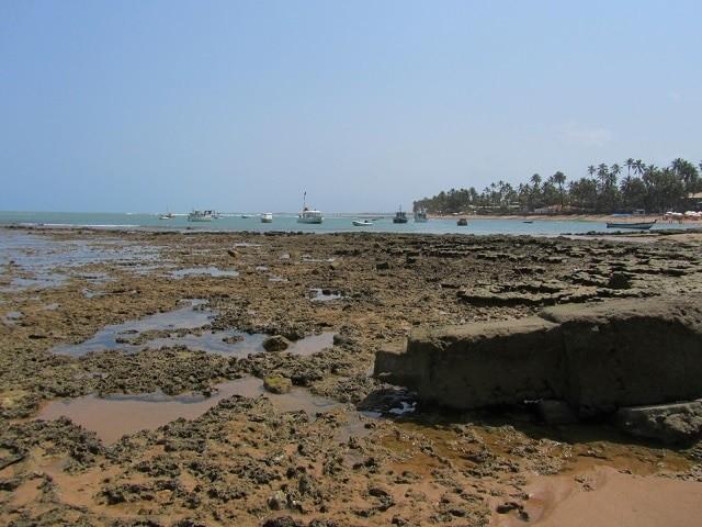 praia-do-forte-salvador-2014
