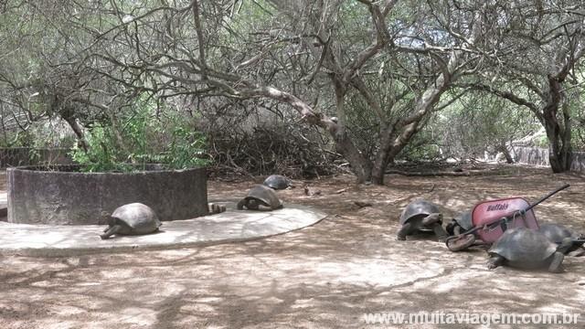 As galápagos vivem mais de 100 anos