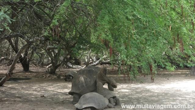 ... e tirei uma foto íntima das tartarugas gigantes