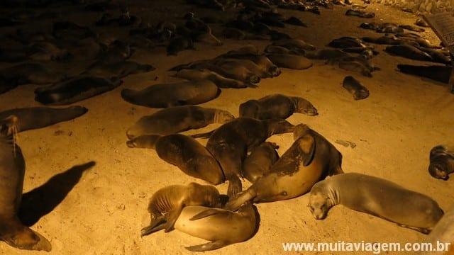 Lobos-marinhos se juntam para dormir em um cantinho em San Cristóbal