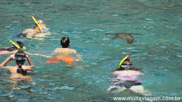 ... mergulhar com lobos-marinhos
