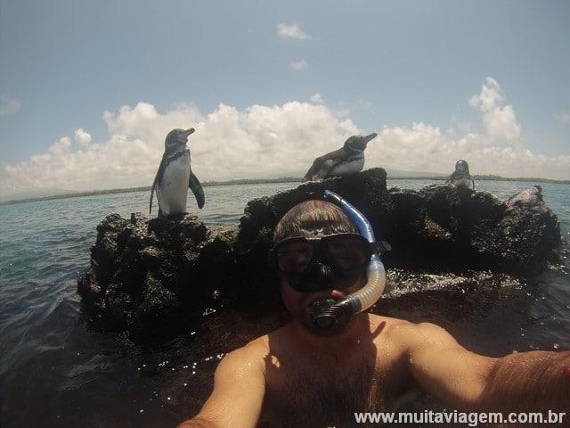 Em uma viagem econômica para Galápagos tirei foto com pinguins...