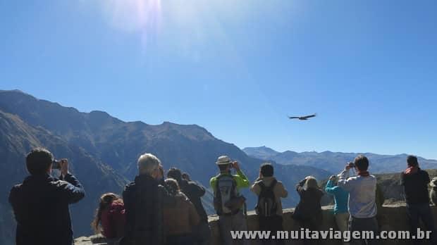 O gigante condor voa perto dos turistas